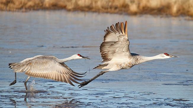 Pair flying (Steve Byland)
